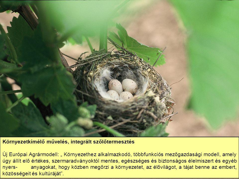 Környezetkímélő művelés, integrált szőlőtermesztés