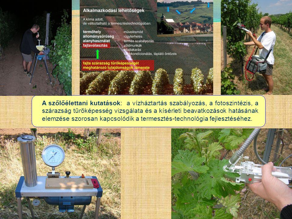 A szőlőélettani kutatások: a vízháztartás szabályozás, a fotoszintézis, a szárazság tűrőképesség vizsgálata és a kísérleti beavatkozások hatásának elemzése szorosan kapcsolódik a termesztés-technológia fejlesztéséhez.