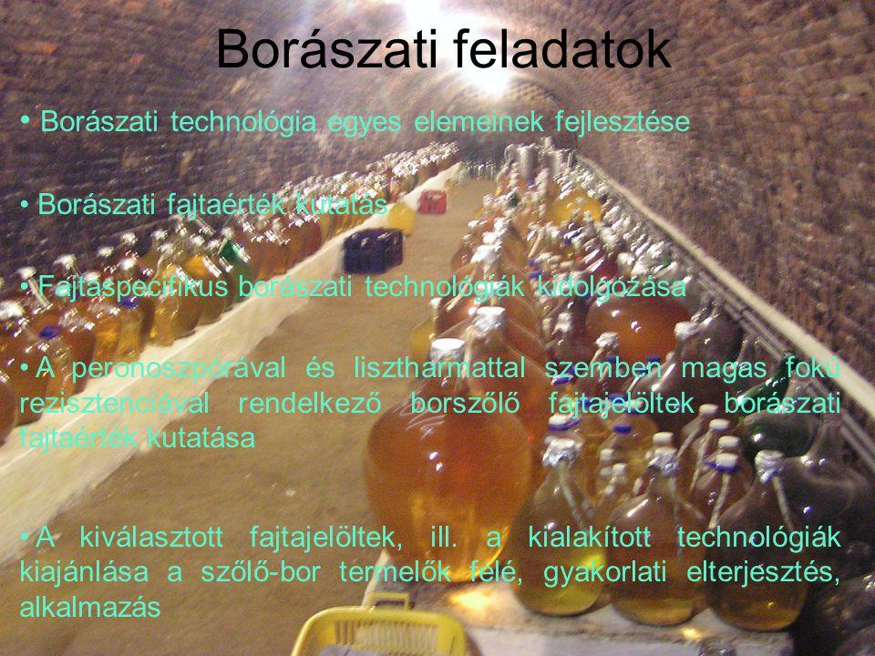 Borászati feladatok Borászati technológia egyes elemeinek fejlesztése