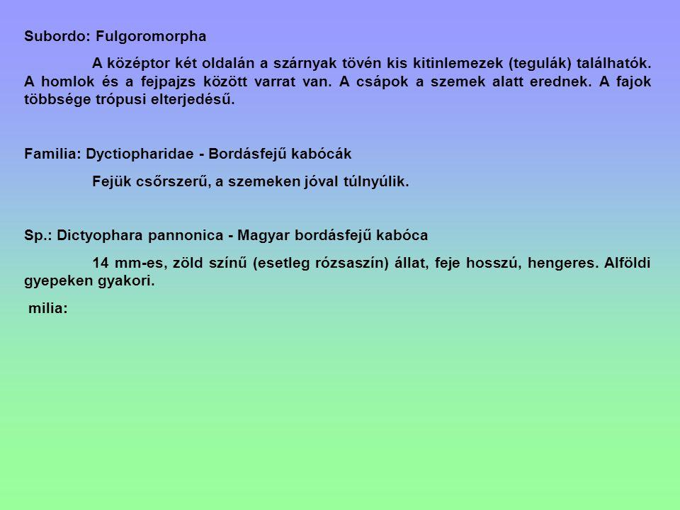 Subordo: Fulgoromorpha