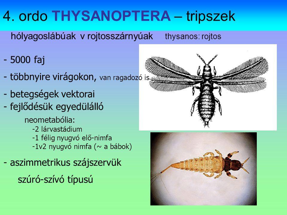 4. ordo THYSANOPTERA – tripszek