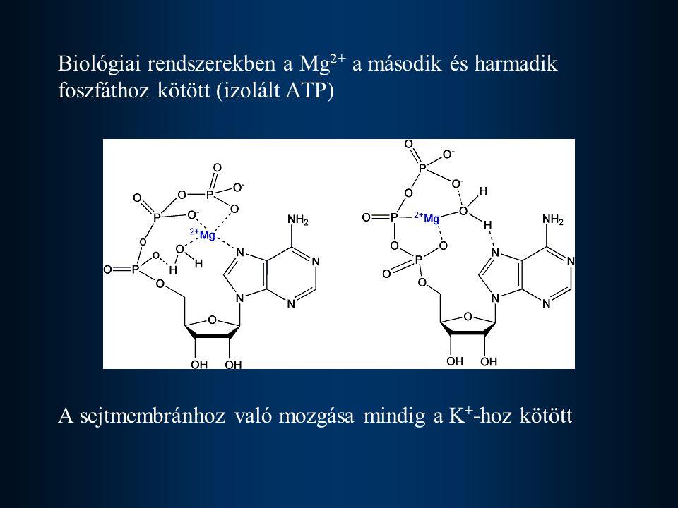 Biológiai rendszerekben a Mg2+ a második és harmadik foszfáthoz kötött (izolált ATP)