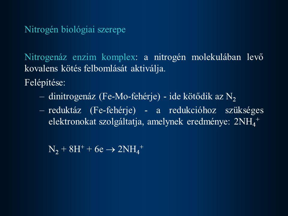 Nitrogén biológiai szerepe
