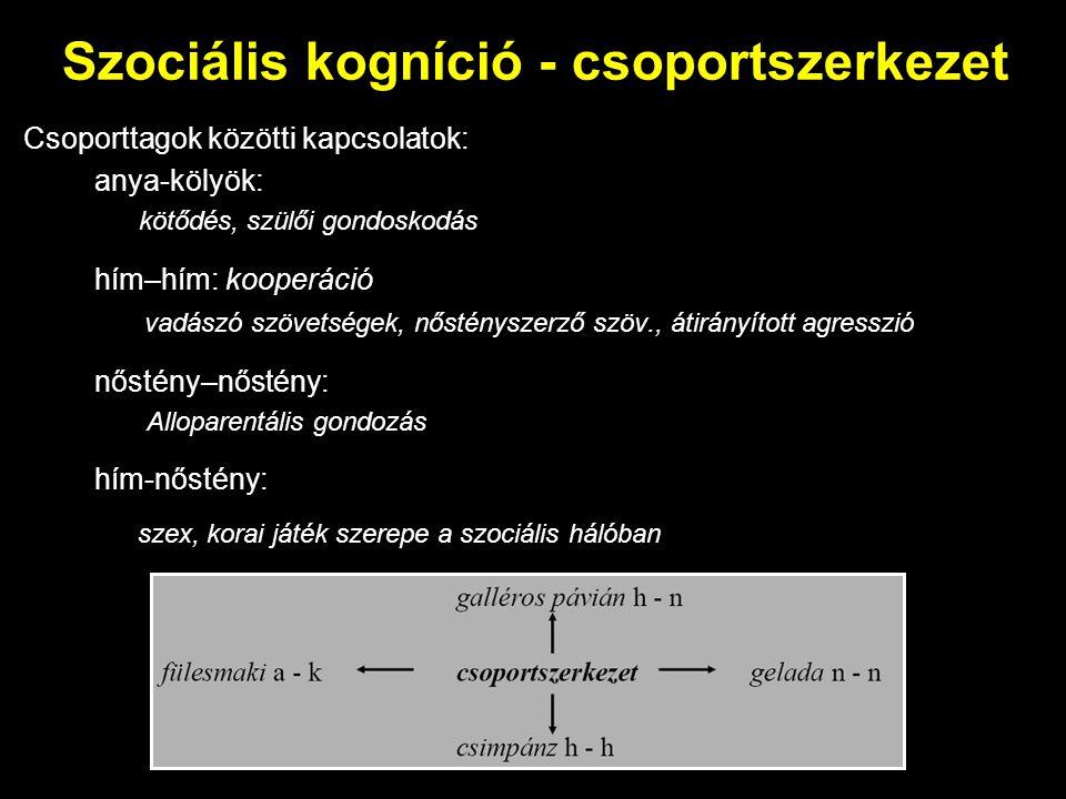 Szociális kogníció - csoportszerkezet