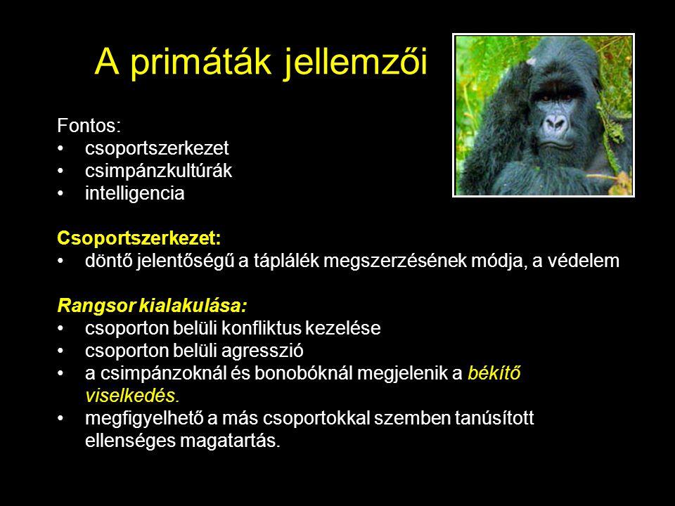 A primáták jellemzői Fontos: csoportszerkezet csimpánzkultúrák