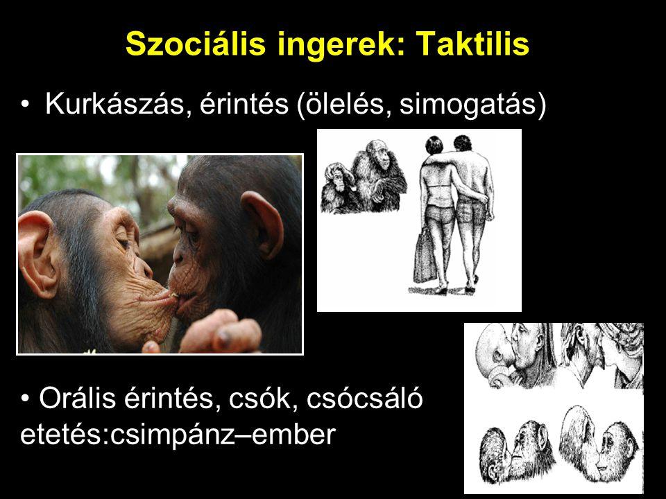 Szociális ingerek: Taktilis