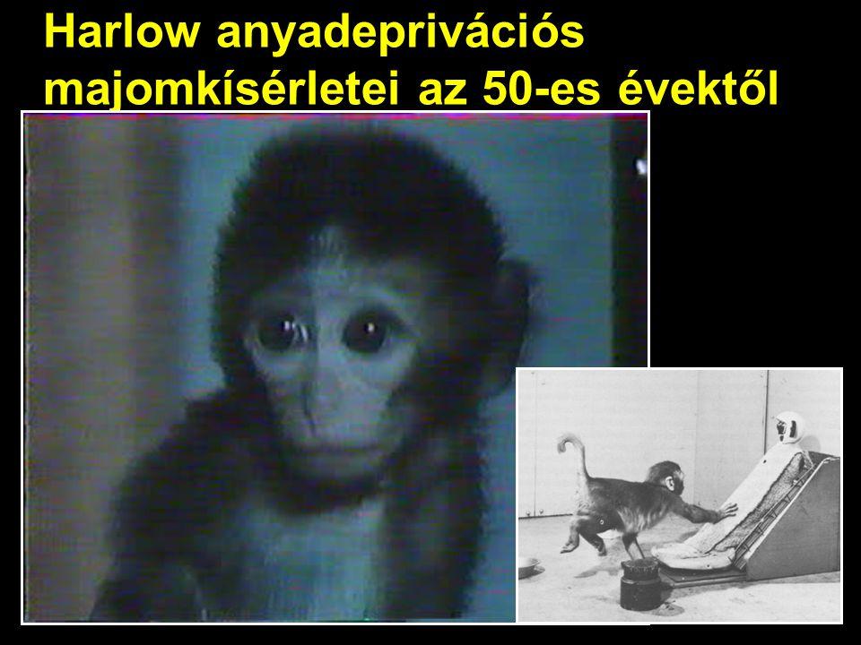 Harlow anyadeprivációs majomkísérletei az 50-es évektől