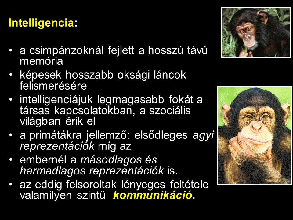 Intelligencia: a csimpánzoknál fejlett a hosszú távú memória. képesek hosszabb oksági láncok felismerésére.
