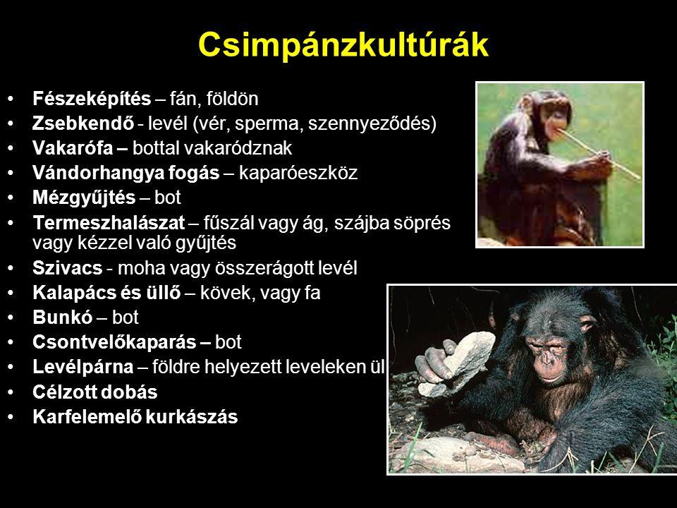 Csimpánzkultúrák Fészeképítés – fán, földön