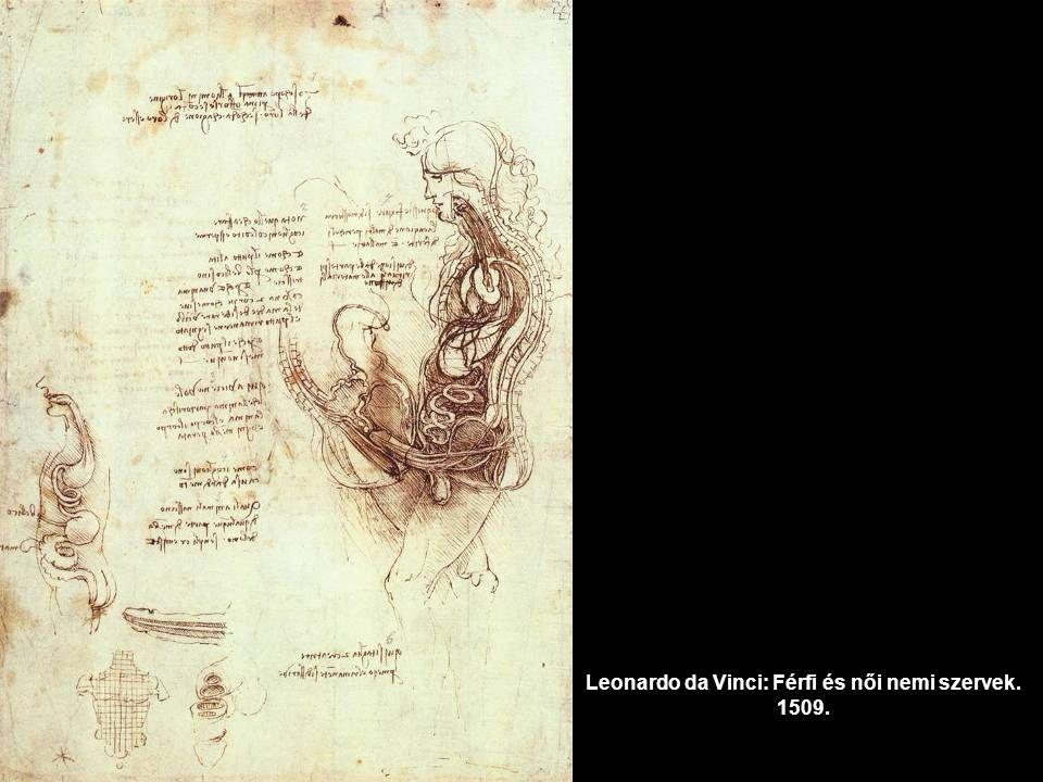Leonardo da Vinci: Férfi és női nemi szervek. 1509.