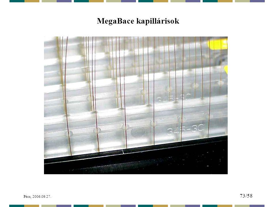 MegaBace kapillárisok