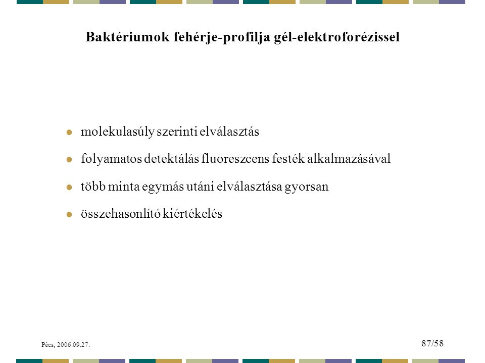 Baktériumok fehérje-profilja gél-elektroforézissel
