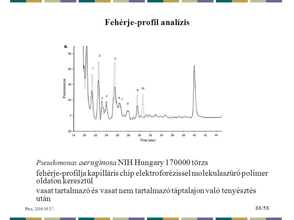 Fehérje-profil analízis