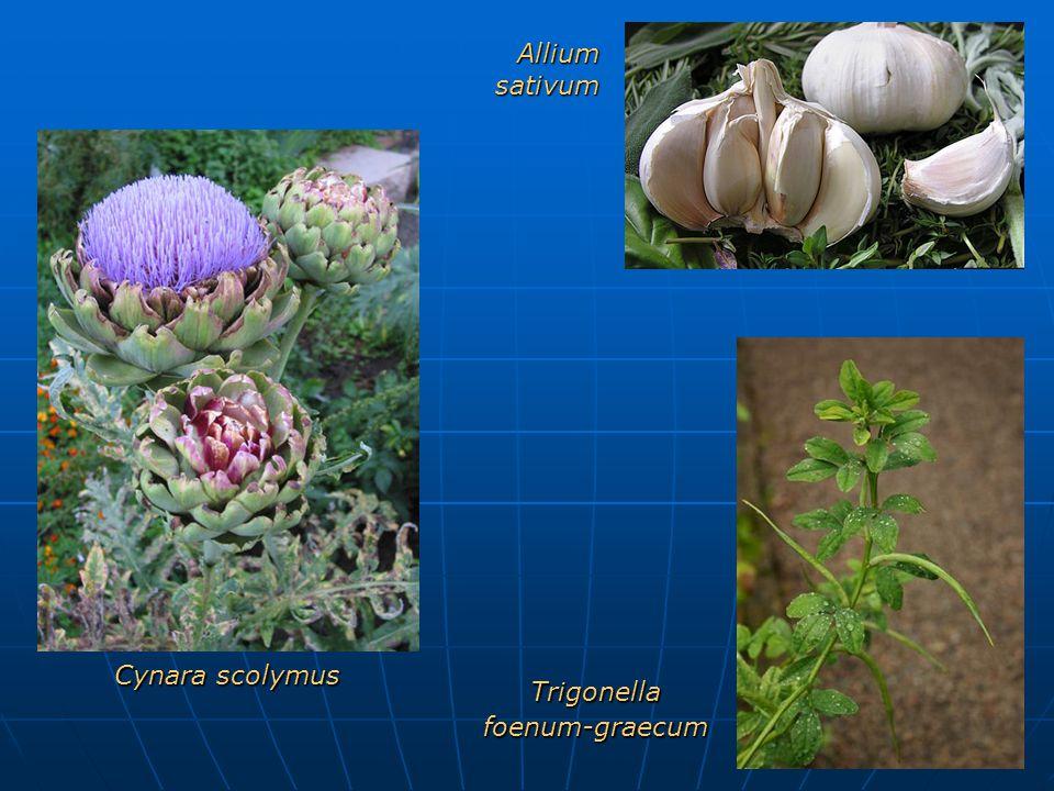 Allium sativum Cynara scolymus Trigonella foenum-graecum