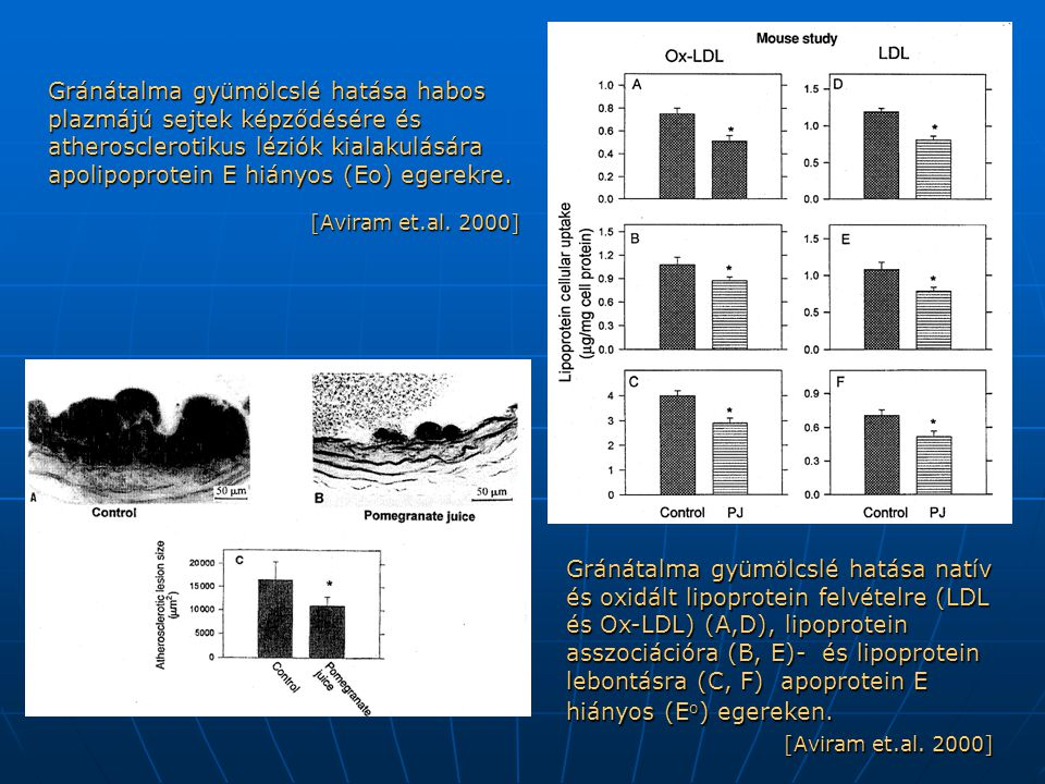 Gránátalma gyümölcslé hatása habos plazmájú sejtek képződésére és atherosclerotikus léziók kialakulására apolipoprotein E hiányos (Eo) egerekre.