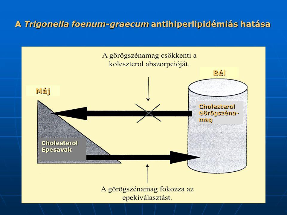 A Trigonella foenum-graecum antihiperlipidémiás hatása