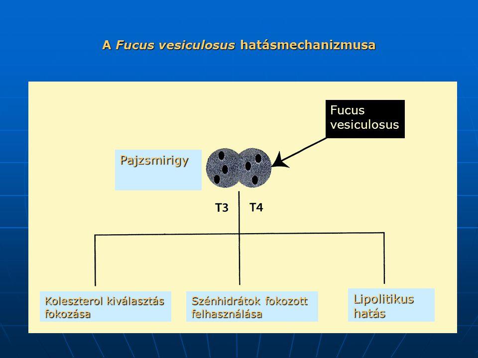 A Fucus vesiculosus hatásmechanizmusa