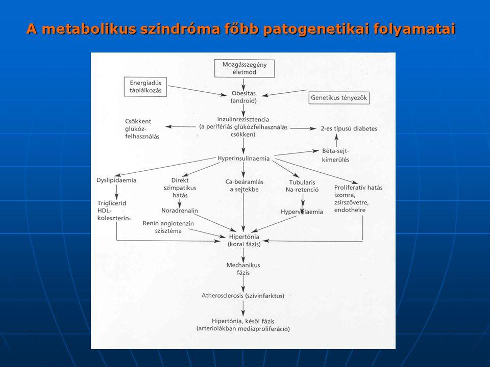 A metabolikus szindróma főbb patogenetikai folyamatai