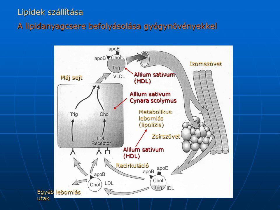 A lipidanyagcsere befolyásolása gyógynövényekkel