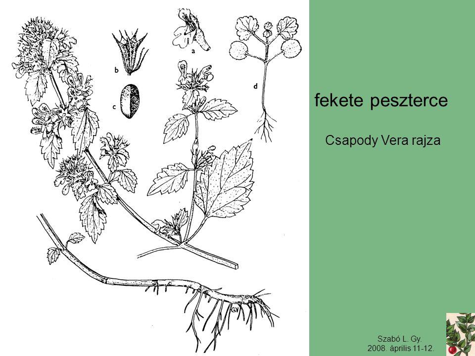 fekete peszterce Csapody Vera rajza Szabó L. Gy. 2008. április 11-12.