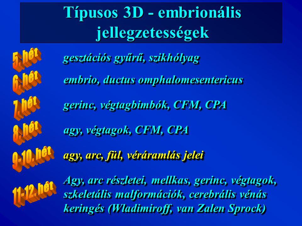 Típusos 3D - embrionális jellegzetességek