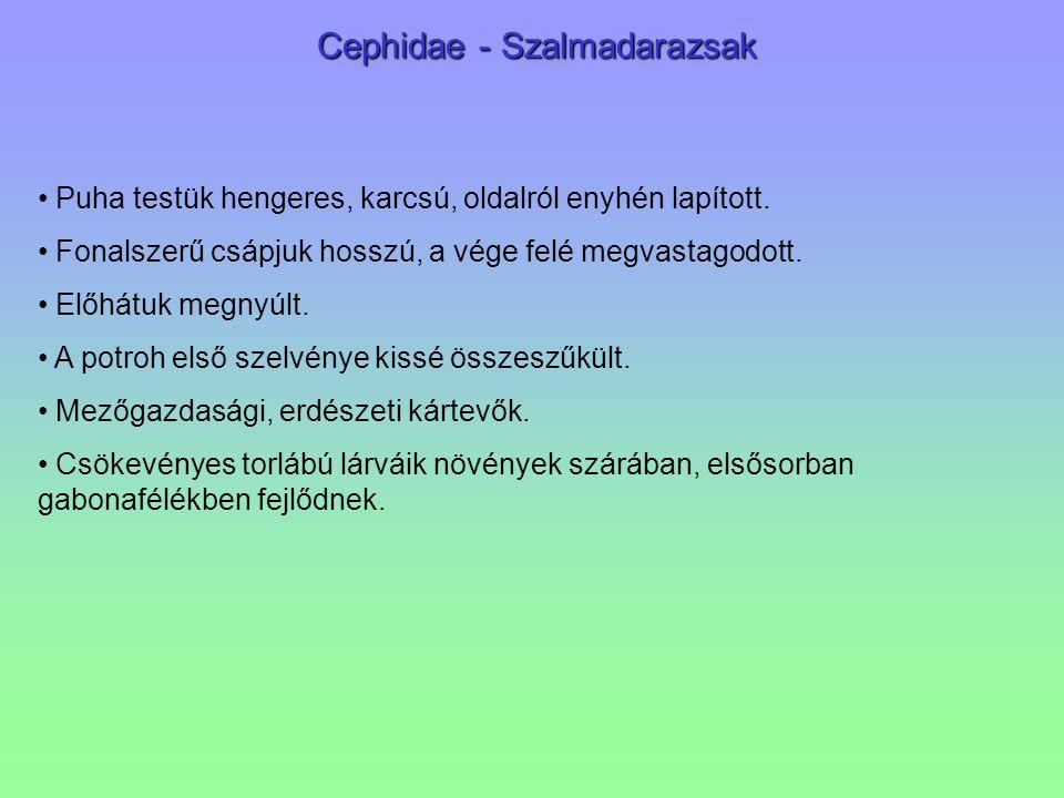 Cephidae - Szalmadarazsak