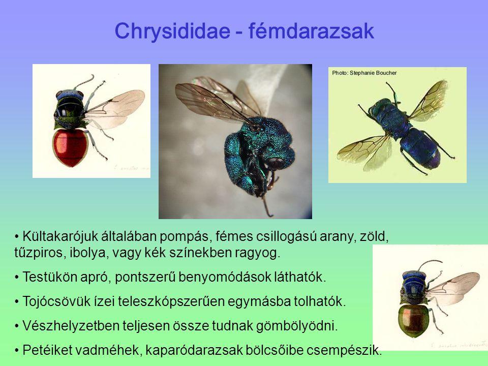 Chrysididae - fémdarazsak