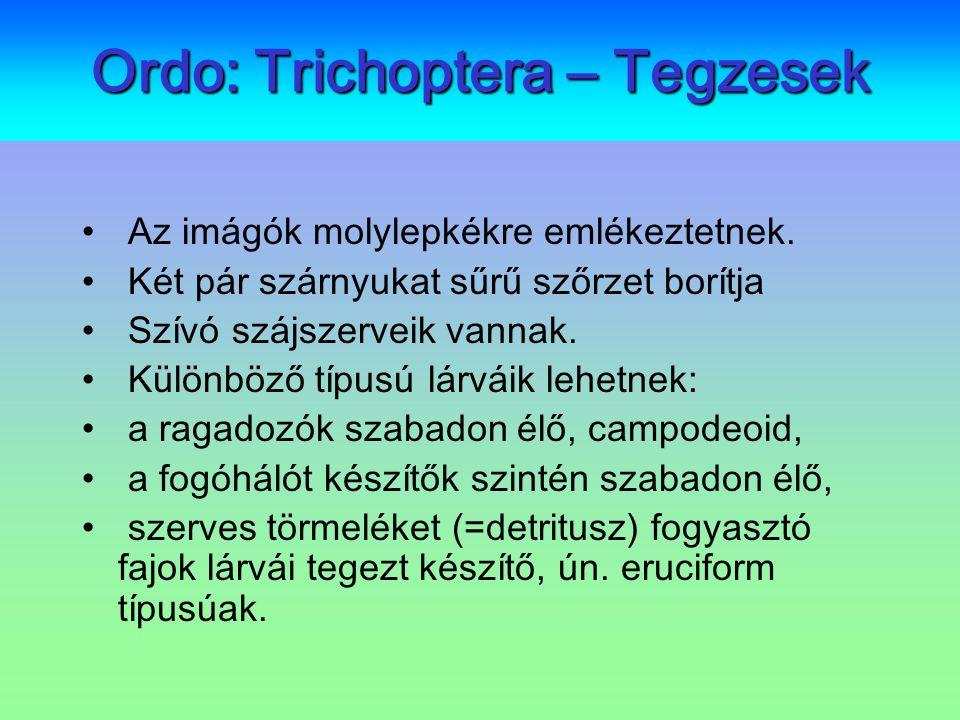 Ordo: Trichoptera – Tegzesek