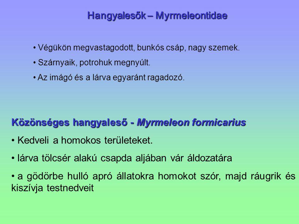 Hangyalesők – Myrmeleontidae