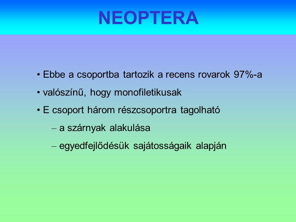 NEOPTERA Ebbe a csoportba tartozik a recens rovarok 97%-a