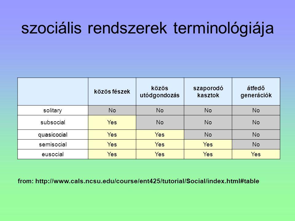 szociális rendszerek terminológiája