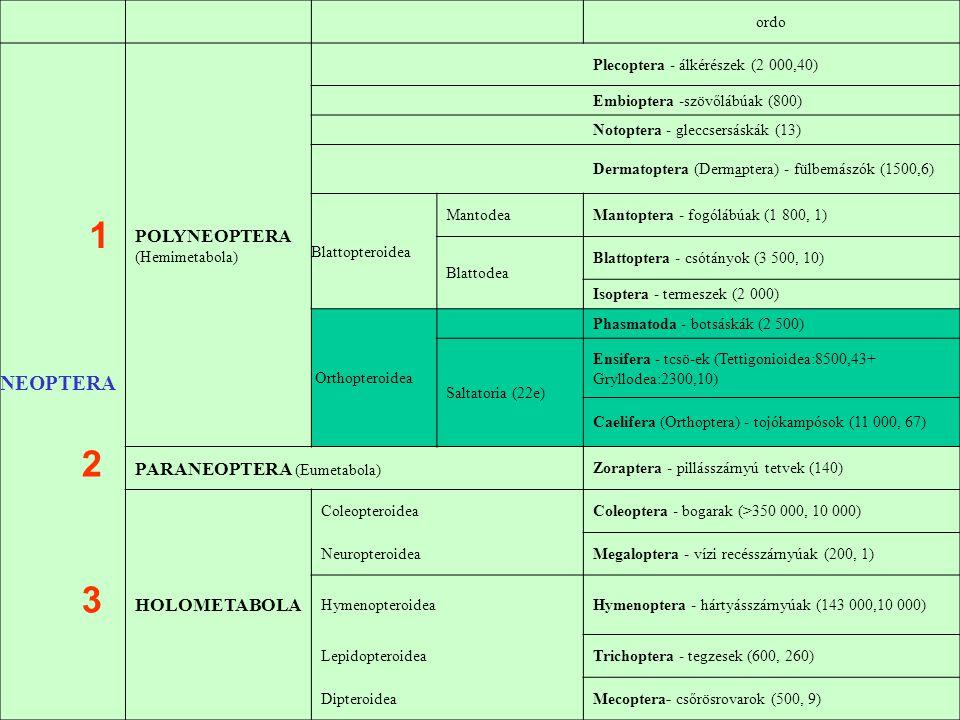 1 2 3 NEOPTERA POLYNEOPTERA (Hemimetabola) PARANEOPTERA (Eumetabola)