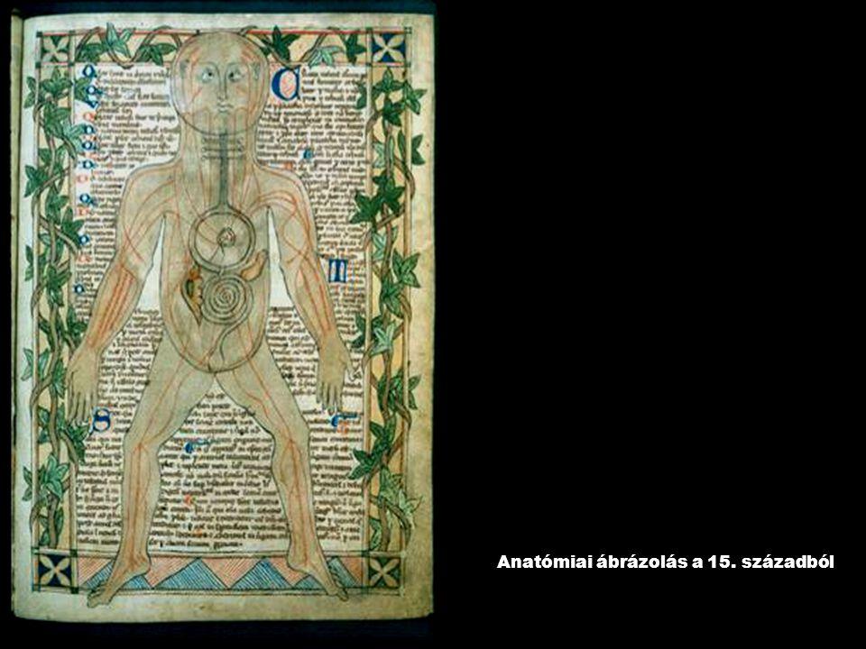 Anatómiai ábrázolás a 15. századból