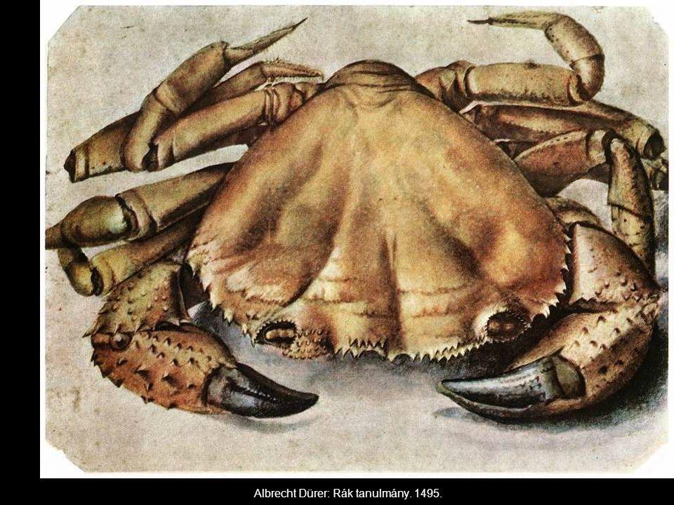 Albrecht Dürer: Rák tanulmány. 1495.