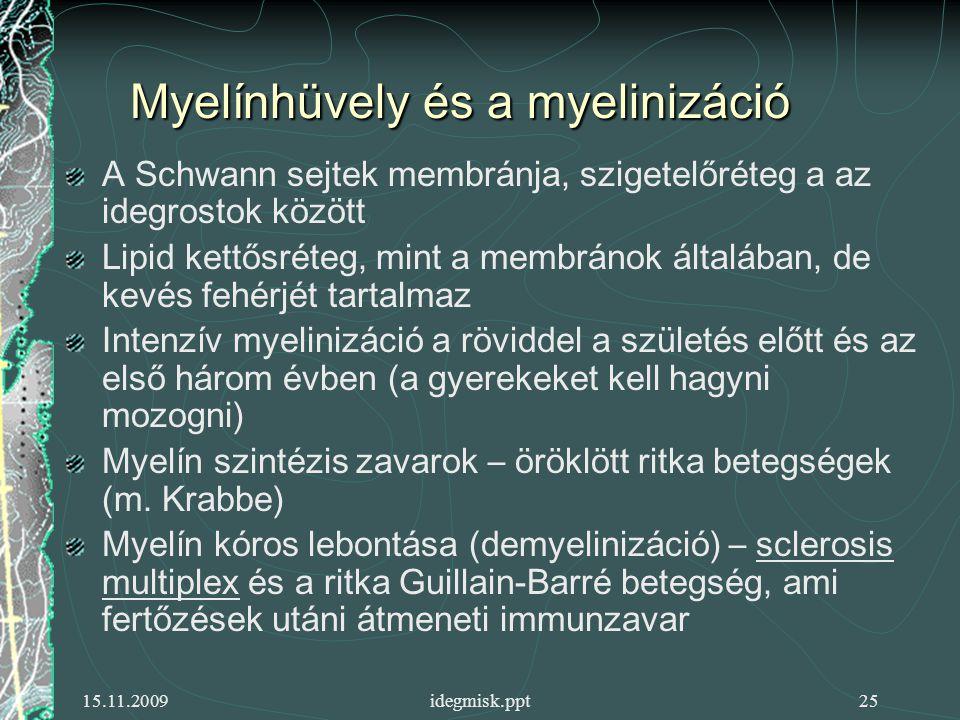 Myelínhüvely és a myelinizáció