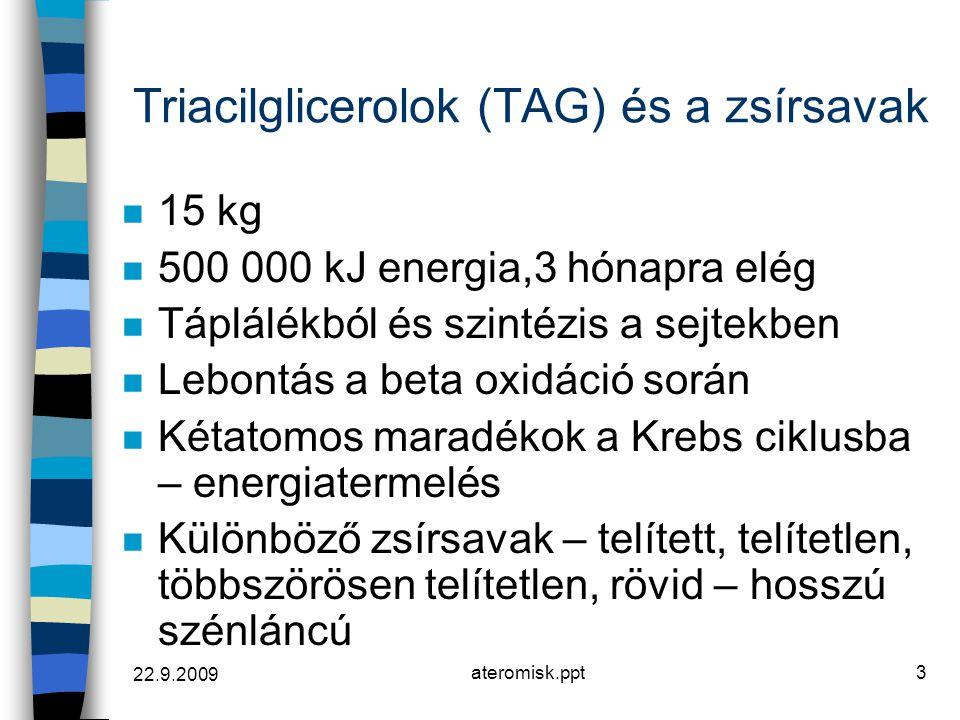 Triacilglicerolok (TAG) és a zsírsavak