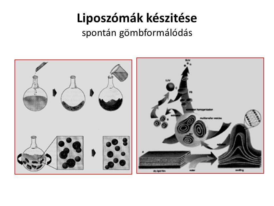 Liposzómák készitése spontán gömbformálódás