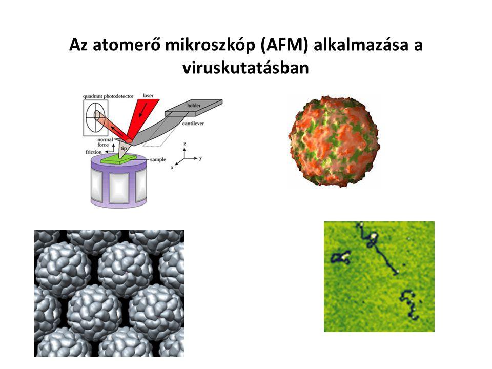 Az atomerő mikroszkóp (AFM) alkalmazása a viruskutatásban