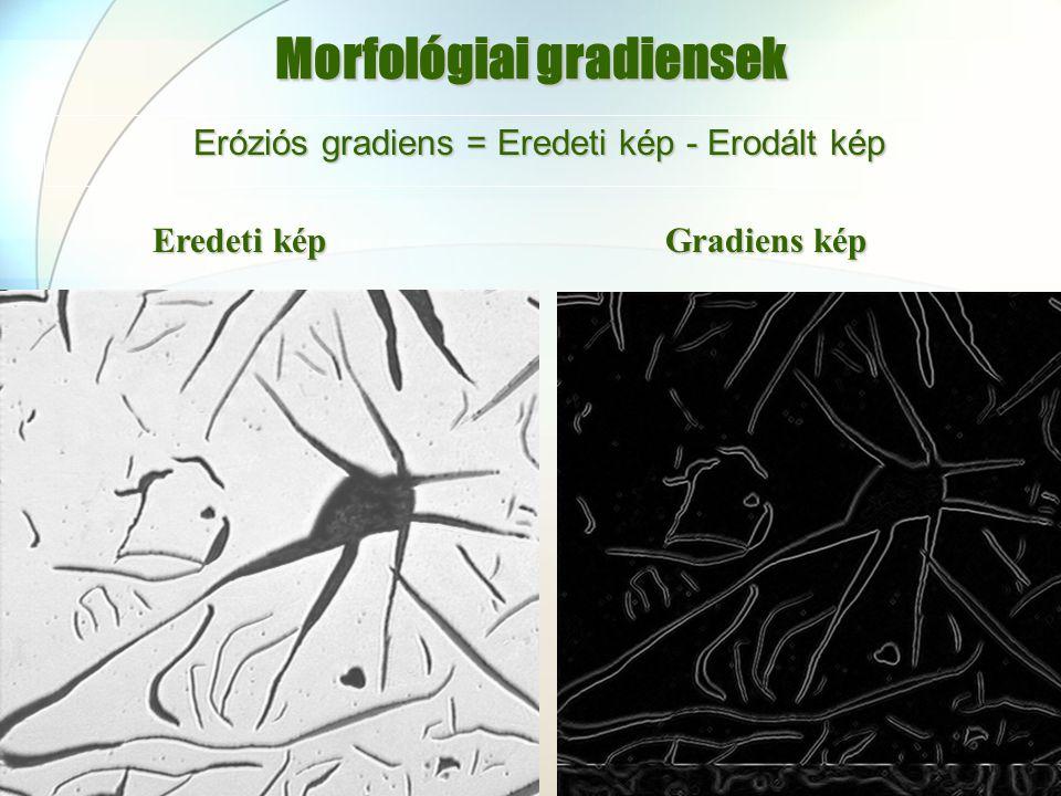 Morfológiai gradiensek