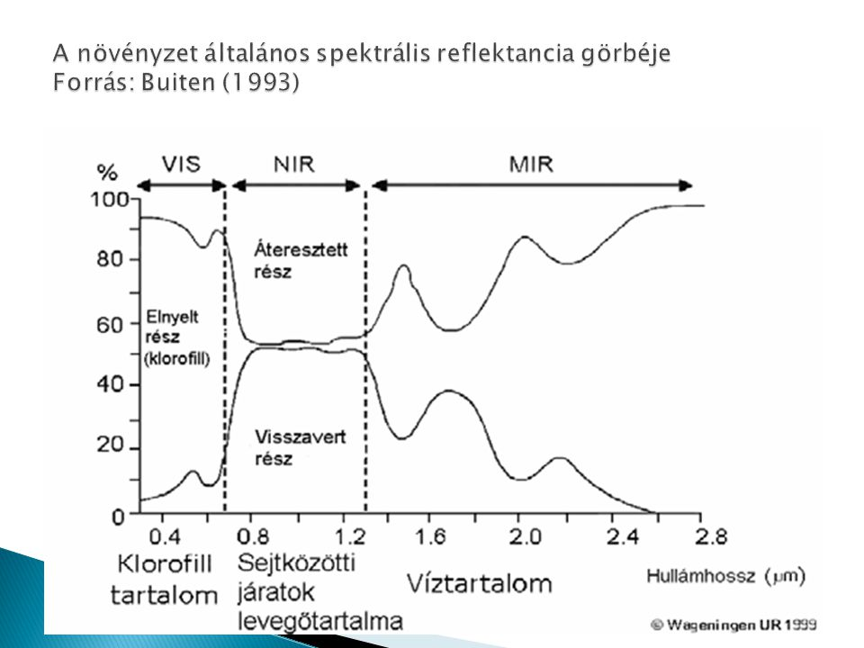 A növényzet általános spektrális reflektancia görbéje Forrás: Buiten (1993)