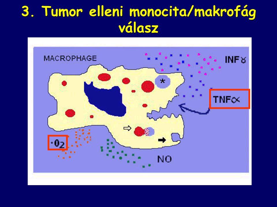3. Tumor elleni monocita/makrofág válasz