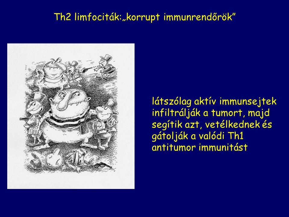 """Th2 limfociták:""""korrupt immunrendőrök"""