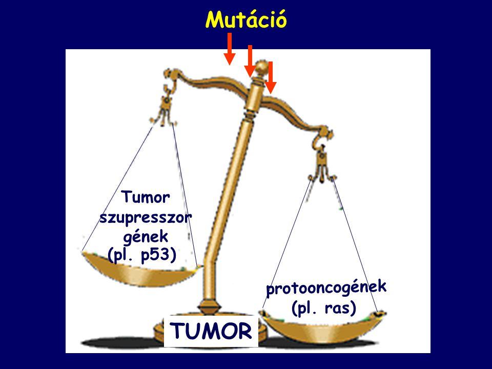 Tumor szupresszor gének