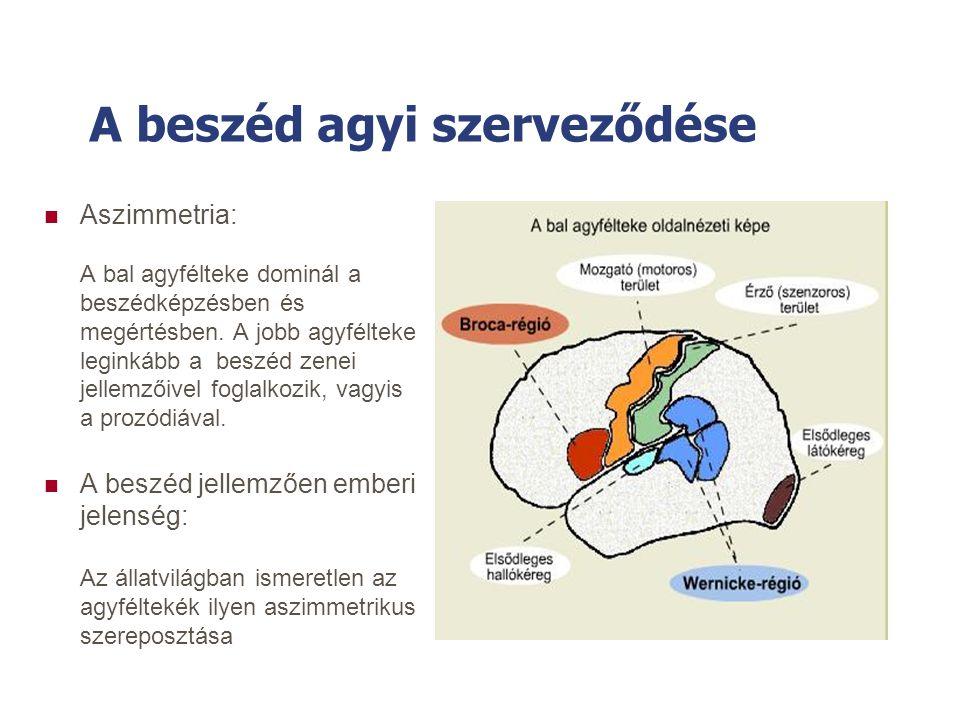 A beszéd agyi szerveződése