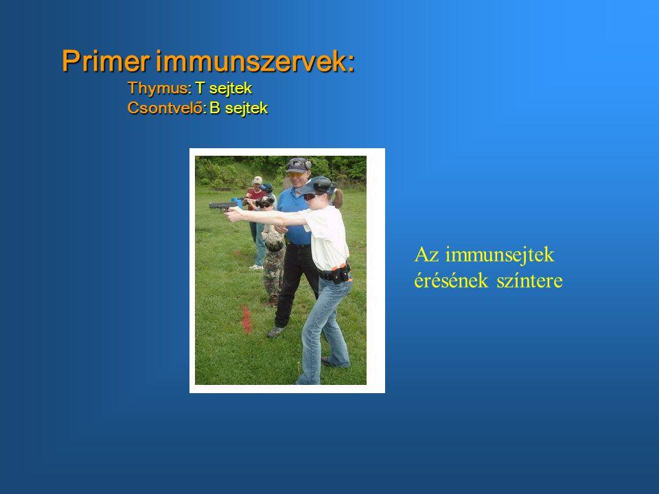 Primer immunszervek: Thymus: T sejtek