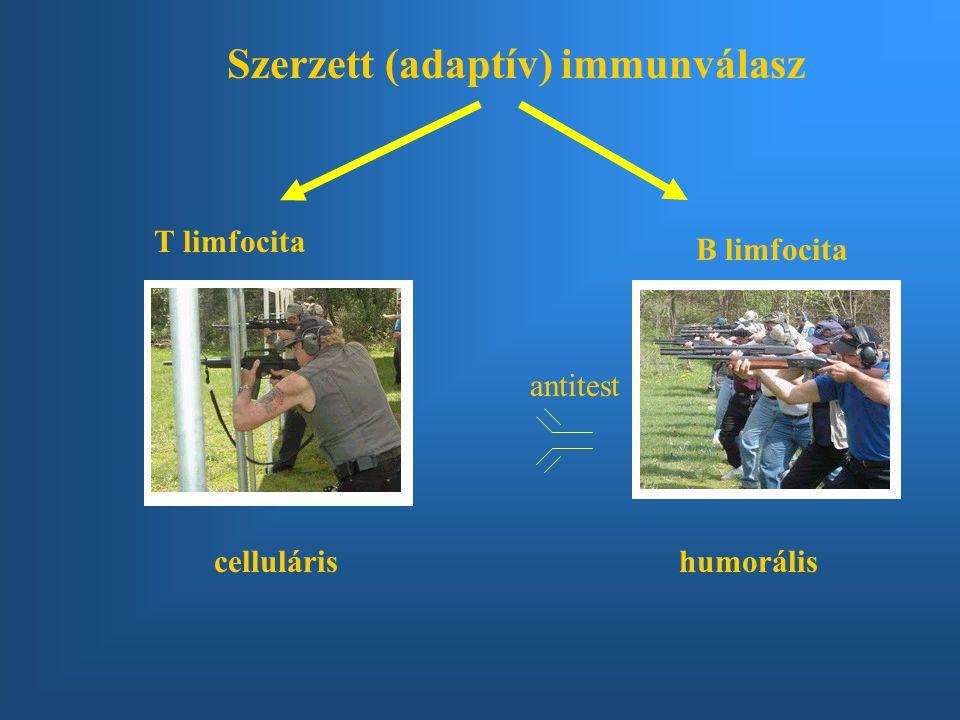Szerzett (adaptív) immunválasz