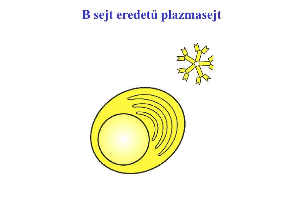 B sejt eredetű plazmasejt