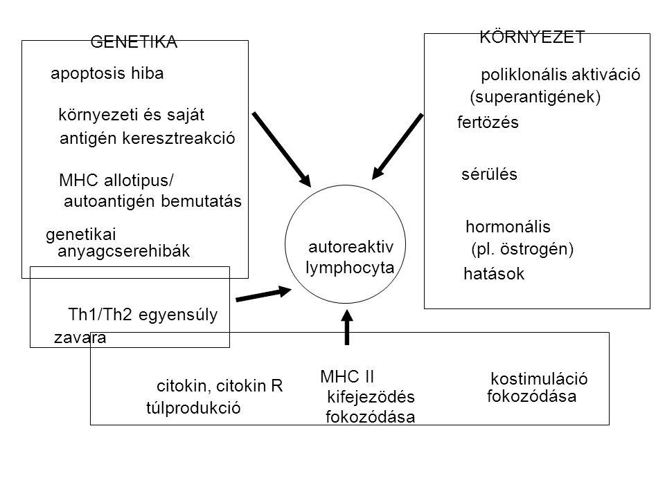 KÖRNYEZET GENETIKA. apoptosis hiba. poliklonális aktiváció. (superantigének) környezeti és saját.