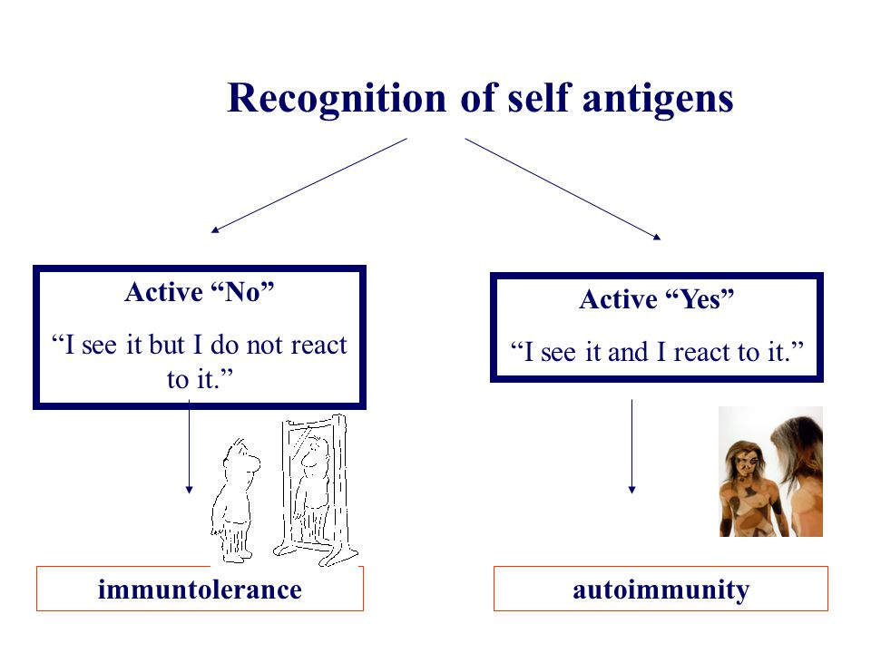 Recognition of self antigens