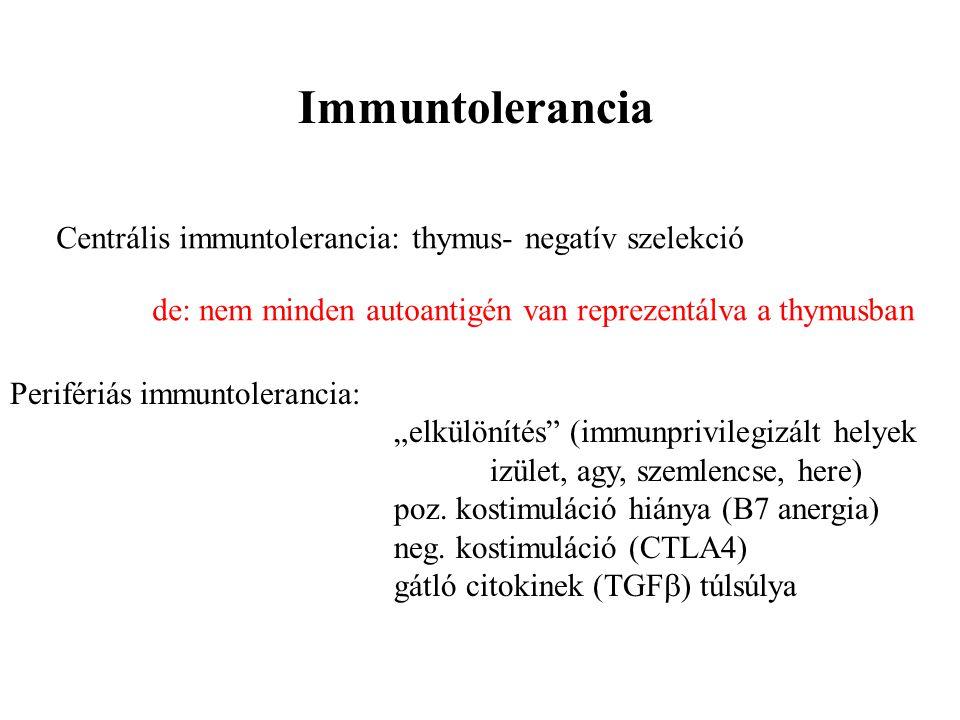 Immuntolerancia Centrális immuntolerancia: thymus- negatív szelekció